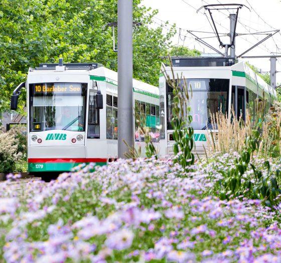 Straßenbahnen auf dem Breiten Weg (Foto: Stefan Deutsch)