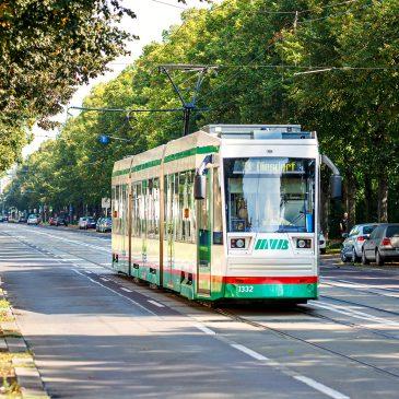 Straßenbahn der Linie 3 auf der Großen Diesdorfer Straße (Foto: Stefan Deutsch)