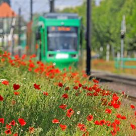 Linie 9 in Richtung Reform (Foto: Peter Gercke)
